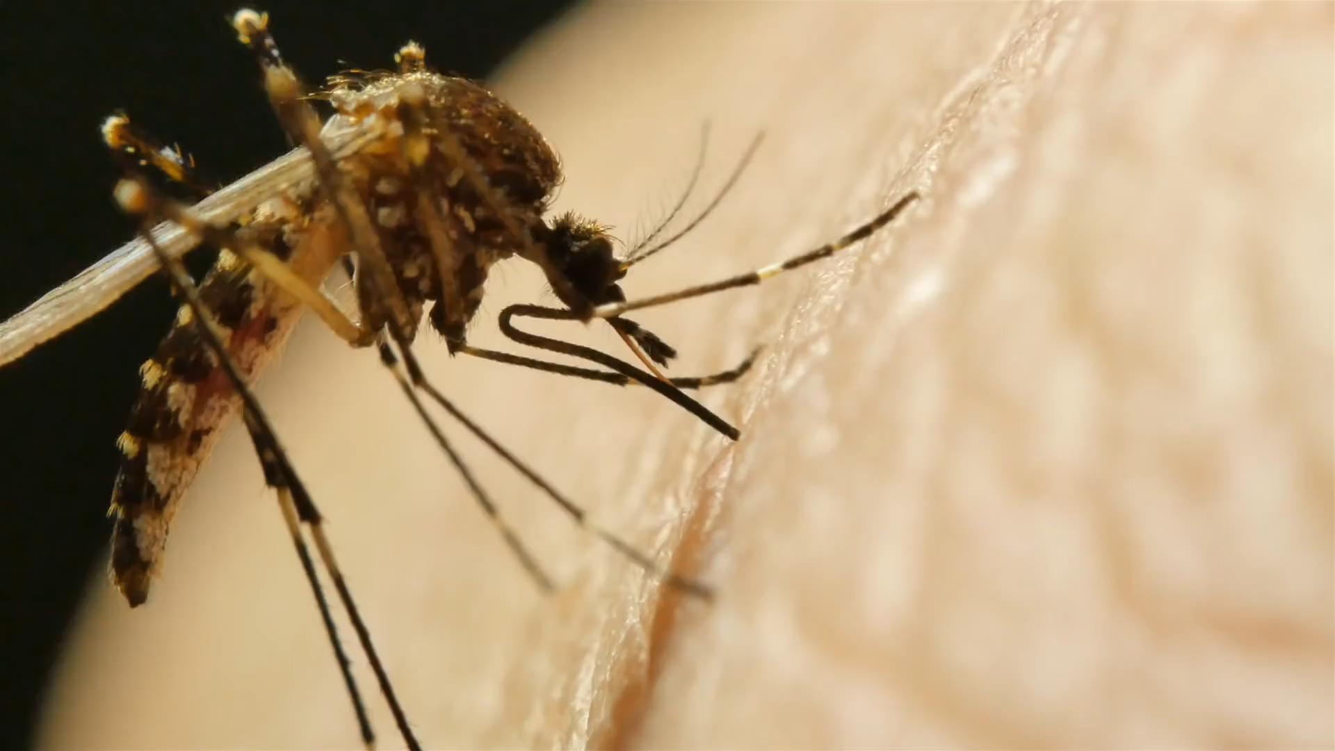 Kogo atakują komary? 5 nietypowych zależności