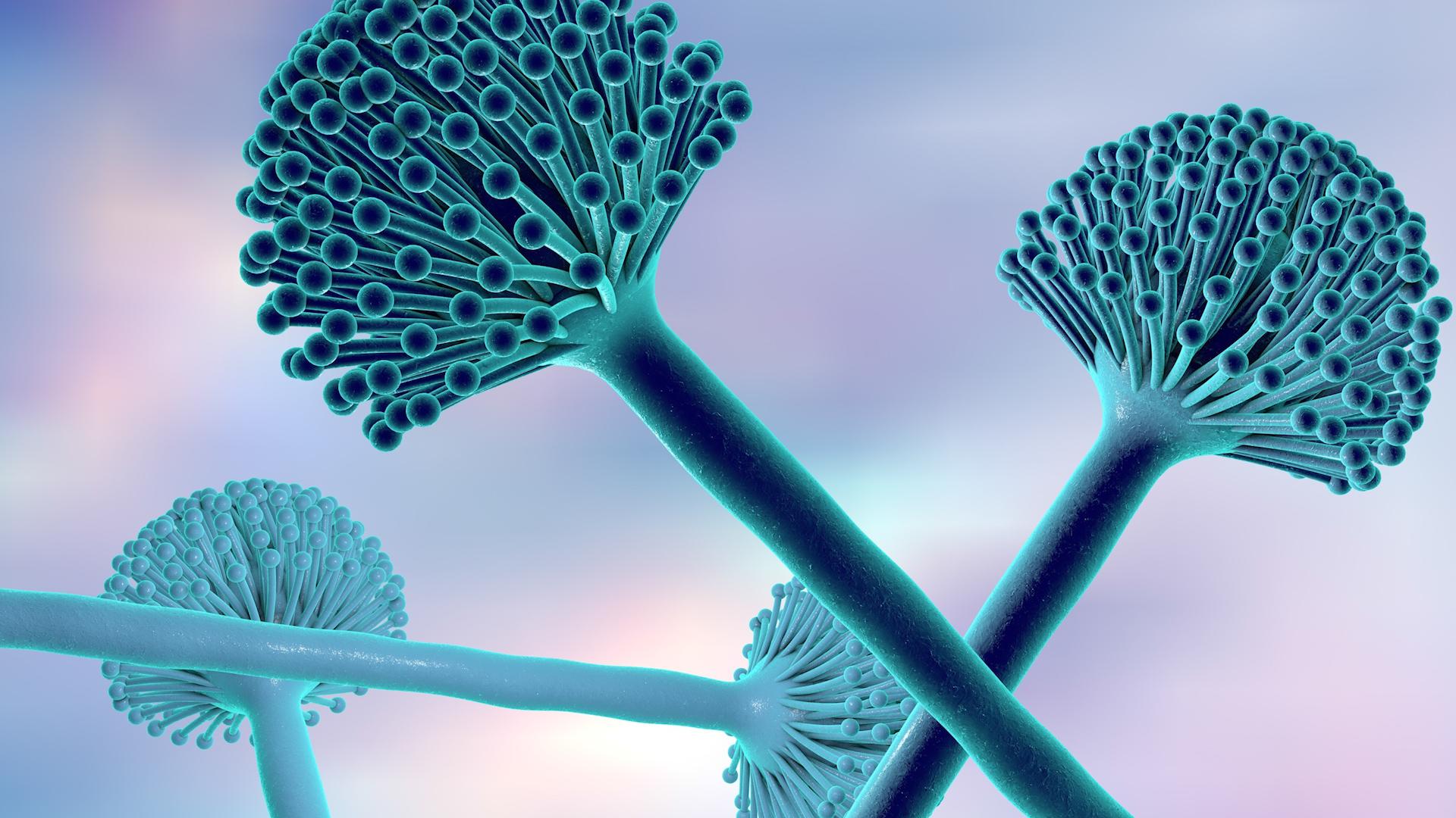 Ziarna zbóż, suszone owoce i orzechy mogą powodować raka wątroby
